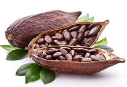 antyoksydanty z ziaren kakaowca