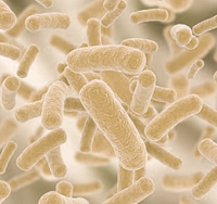bakterie-probiotyczne